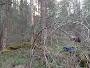 Kate Wolf Tree